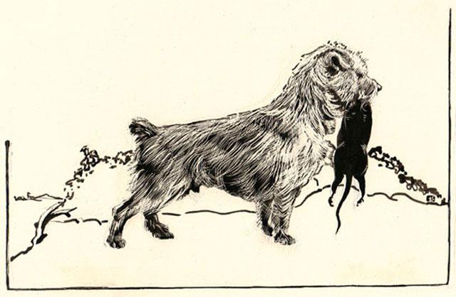 Предки йоркширских терьеров использовались для уничтожения крыс