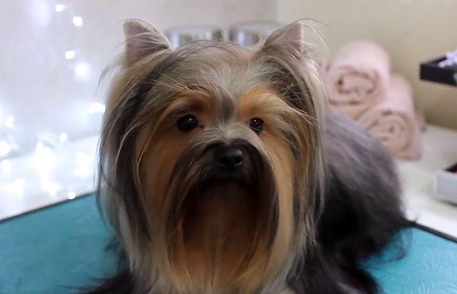 После кастрации поведение собаки меняется