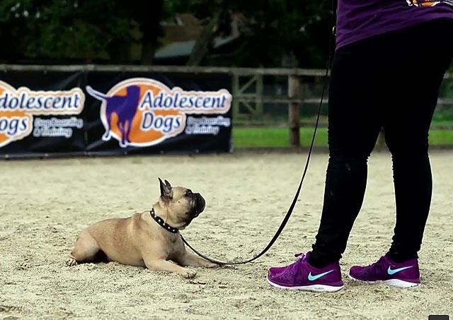 Собака должна следить за каждым вашим движением
