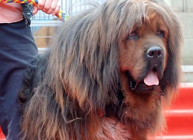 У этих собак не так уж много окрасов