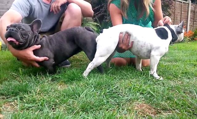 Две собаки в замке