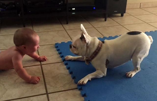 Помогите собаке адаптироваться в новом доме