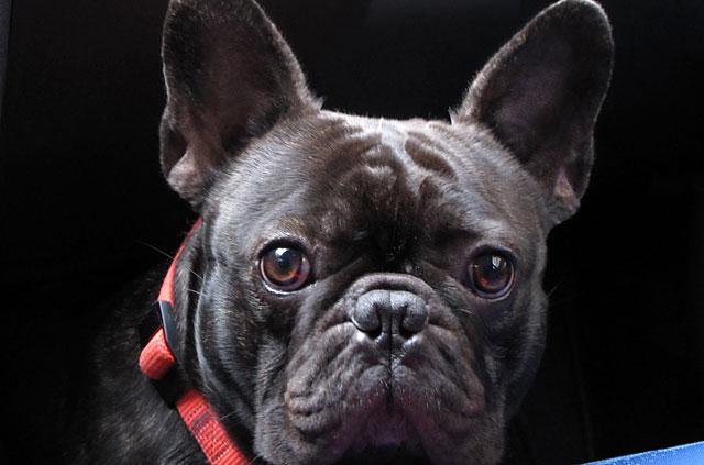 Сухие корма для собак купить в интернет магазине OZON