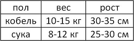 Таблица соотношения веса и роста взрослого французского бульдога