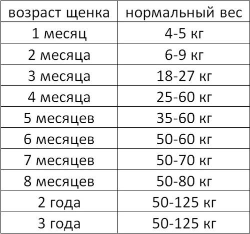 Таблица роста и веса кавказской овчарки по месяцам