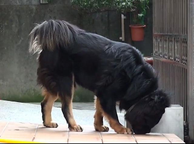 Необходимо перебороть упрямство собаки
