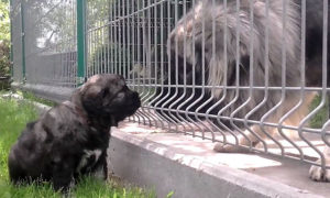 Не забудьте осмотреть родителей щенка