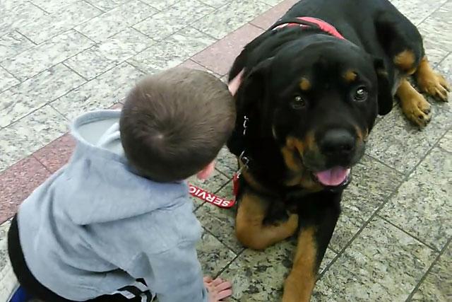 Мальчик общается с ротвейлером
