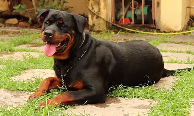Во дворе частного дома собака может и побегать, и отдохнуть