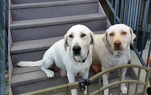 Два брата терпеливо ждут хозяина