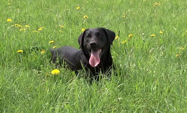 Свежий воздух полезен для здоровья собаки