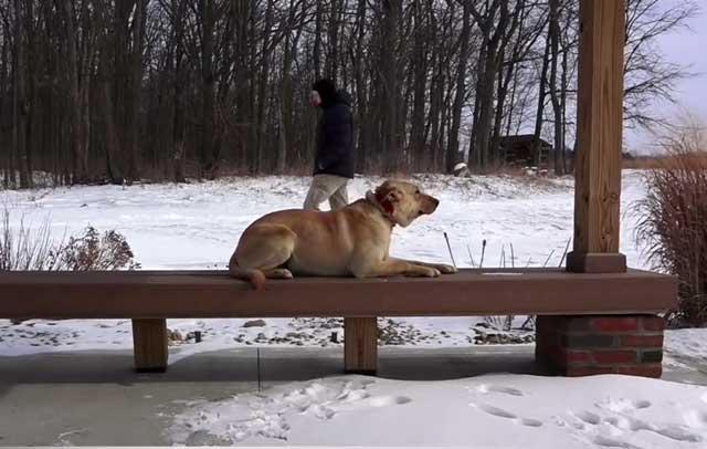 Собака должна ждать хозяина в положенном месте