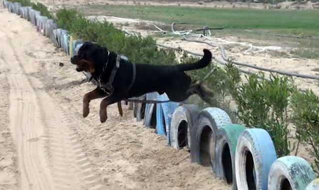 Прыжки через барьеры