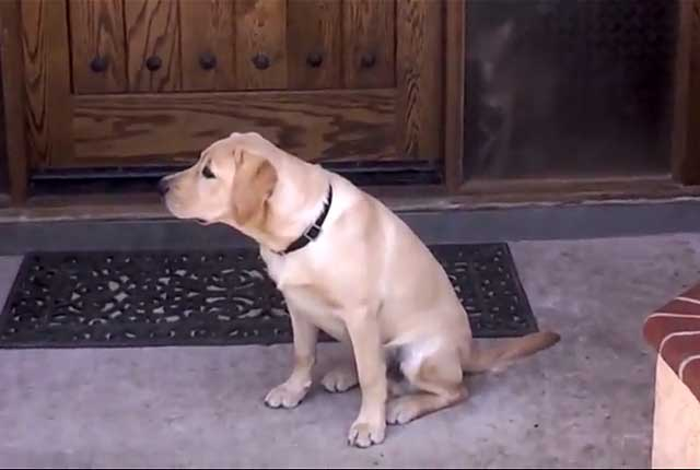 Собаке нужна выдержка