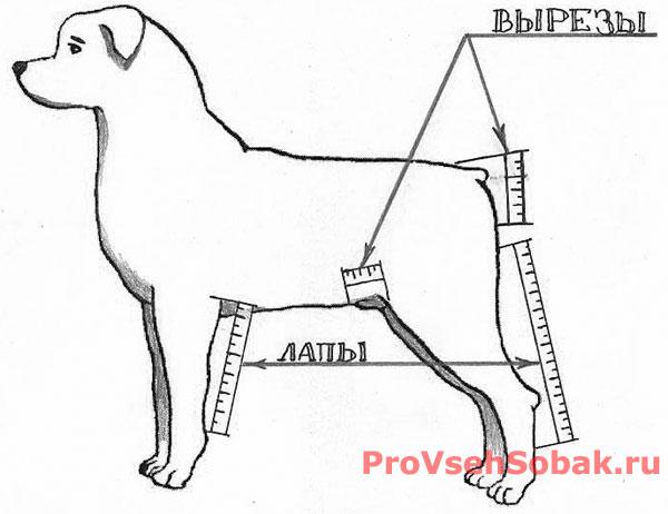 Обязательны вырезы под хвост и половые органы собаки