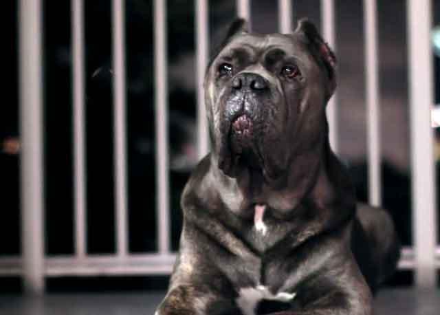 Верная и преданная собака