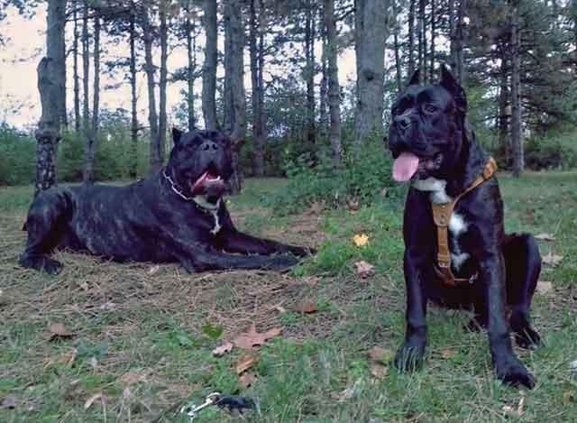 Прогулки полезны для здоровья собак