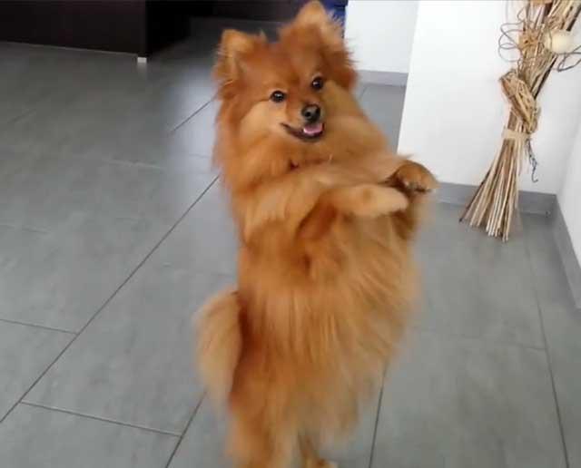 Танец на задних лапках