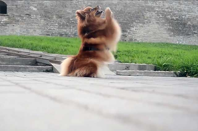 Собака должна знать, что можно, а что нельзя