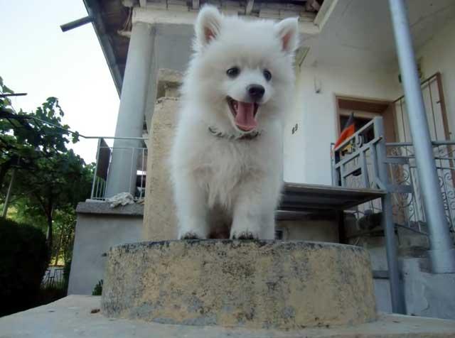 Веселая и дружелюбная собака