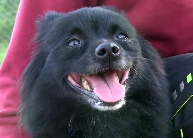 Улыбчивая собачка