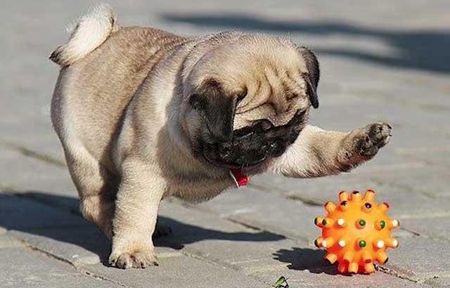 Какой интересный мячик