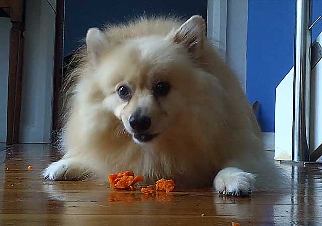 Ухоженная собака - красивая собака