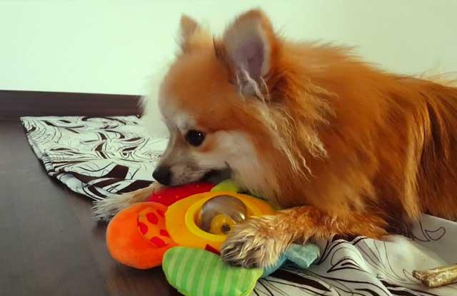 Собака просто обожает игры
