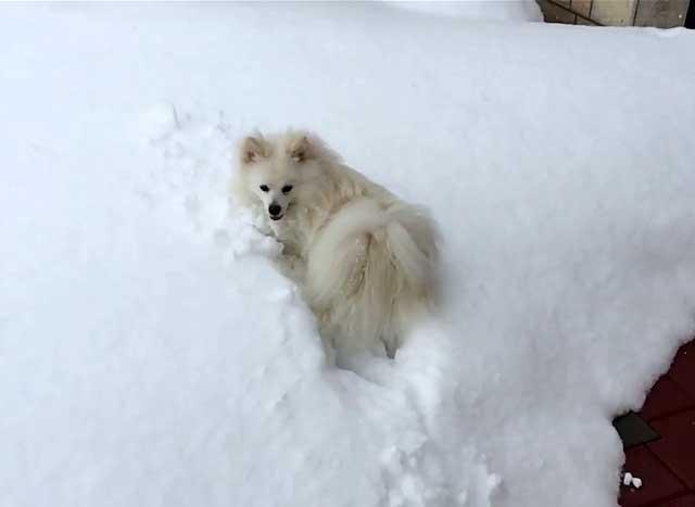 Морозы и снег питомцу не страшны