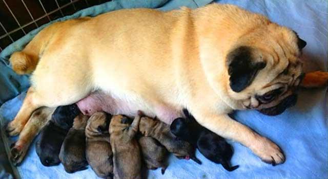 Первое кормление малышей