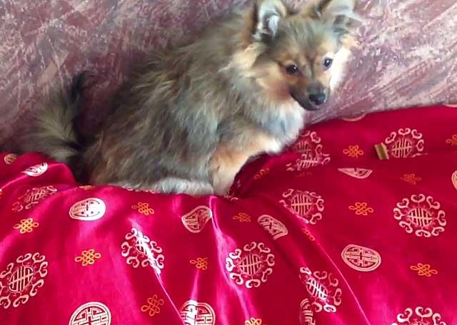 Безопасность дома исключает несчастные случаи с собакой