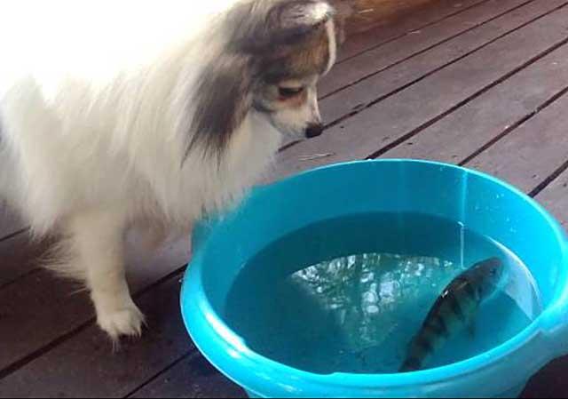 Собачка любит рыбку