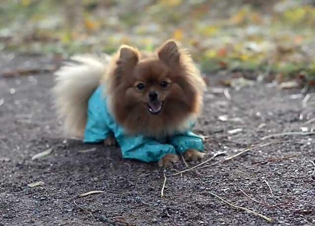 Очаровательная девочка в платьице