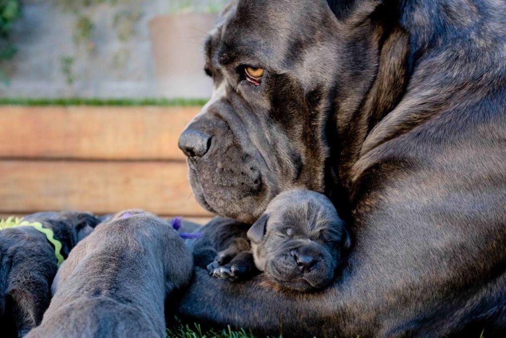 мама обнимает малыша