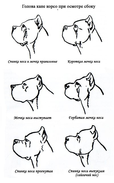 Осмотр собаки