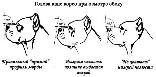 Проблемы с челюстью