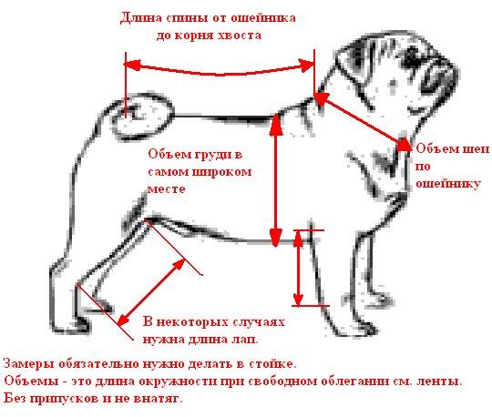 Замеры собаки