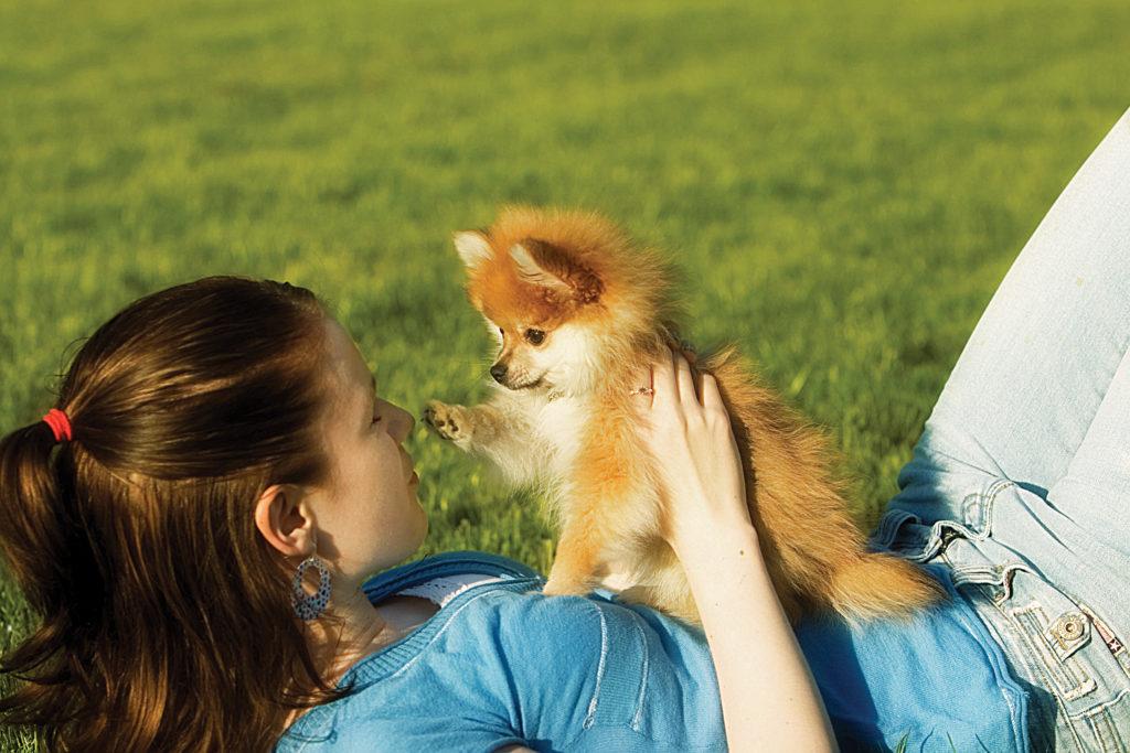 гуляем с щенком