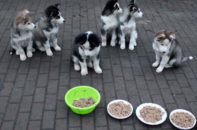 Корм для собак Роял Канин купить ?? низкая цена в Myzoomag