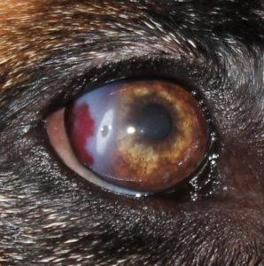 Покраснение и слезоточивость глаз