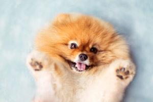 Окрас щенка можно определить после пяти месяцев
