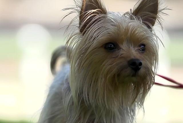 После операции собаке будет необходим уход