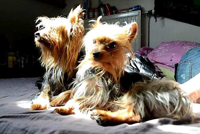 Вовремя делайте собакам прививки