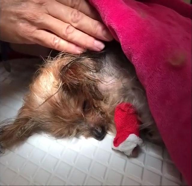 Обеспечьте больной собаке максимальный комфорт