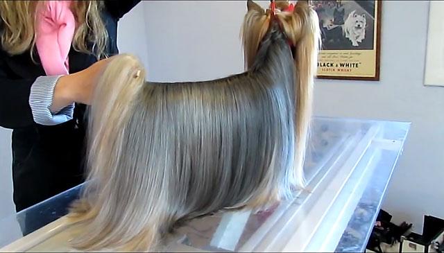 Шерсть по структуре близка к человеческому волосу