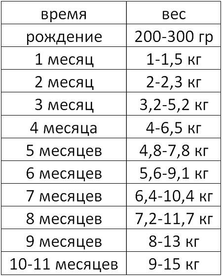 Таблица веса французского бульдога по месяцам