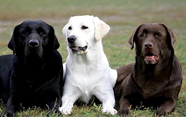 Три брата с разным окрасом шерсти