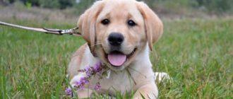У спокойного щенка нормальная психика