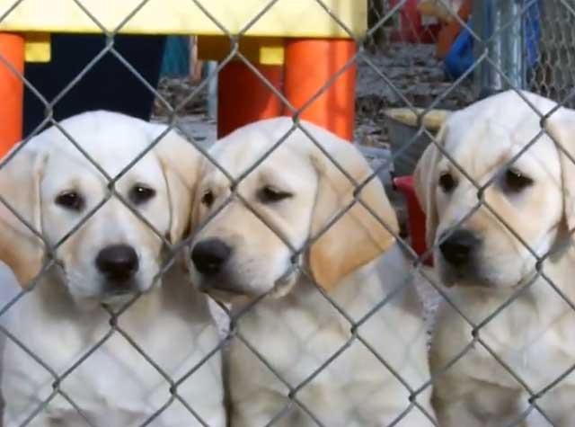 У каждого щенка должно быть свое место
