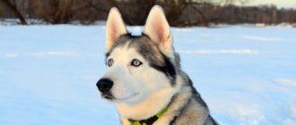 dog-4004681_640